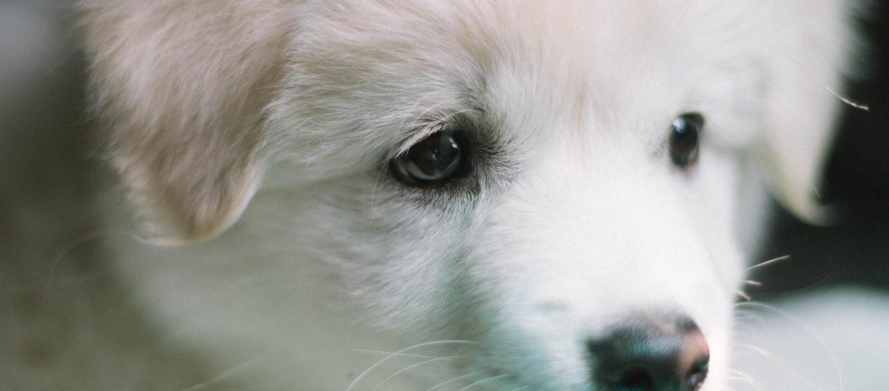 Een puppy op komst? Dit moet je veranderen in huis