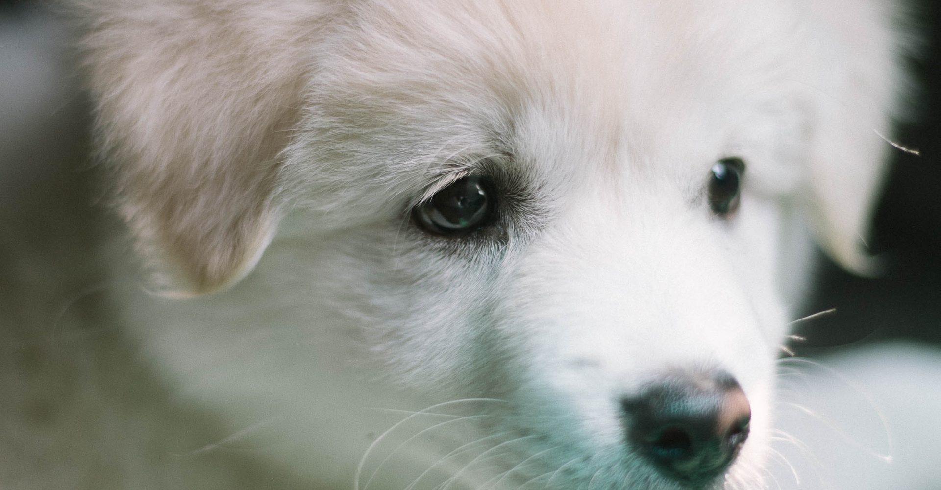 puppyvoer