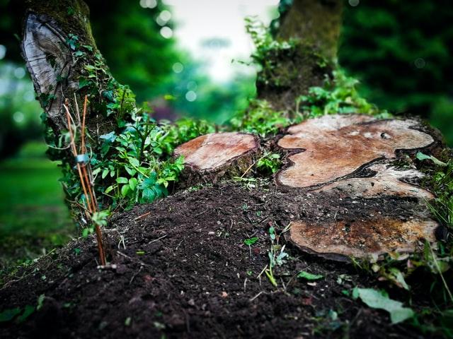 Tuin verbouwen? Huur een puincontainer!